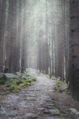 Fotografie im Harz